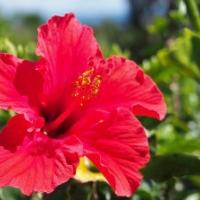 【GW島旅レポート】亜熱帯アイランド・八丈島は温泉の島♪ Vol.2