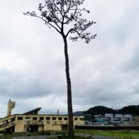 【復興支援ツアー2018】復興への希望を体感する旅レポート by leoleo