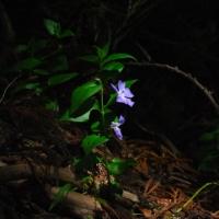 木漏れ日に咲く幽玄の花