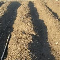 種から始める野菜作り(3)
