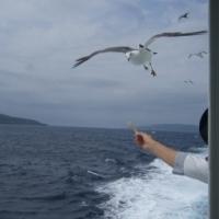 天売島から考える地域振興とエコツーリズム