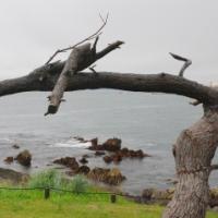 【遺構と記憶】津波に立ち向かい、未来を見つめる龍の松