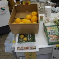 【島のお土産】八丈島「菊池レモン」