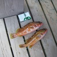 【島あそび】泳ぎ釣りに出かけよう!