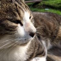 発見・今日の一枚「温水池の猫クンの続報」