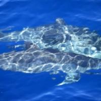 【島あそび】イルカと泳ごう