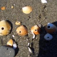 【島のお土産】礼文島「穴あき貝」