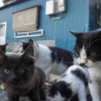田代島と猫と津波【島と○○】