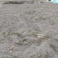 種から始める野菜作り(1)