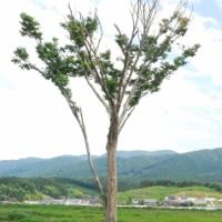 【東北の風の道】震災から5年4カ月(第1号)
