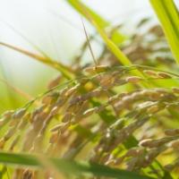 映画「種子」上映会と種子法廃止の講演会に行ってきました!