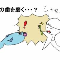 魚の歯を磨く?(父島)【旅レポ】