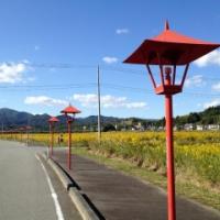東日本大震災・復興支援リポート 「哀しい黄金色に一縷の望み」