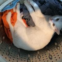 発見・今日の一枚「猫の洗濯機」