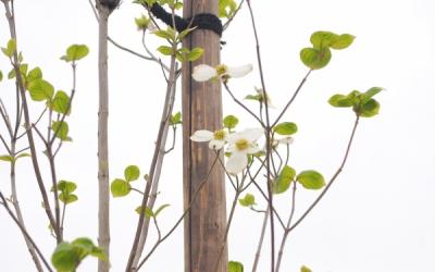 高みへみちびく街路樹は