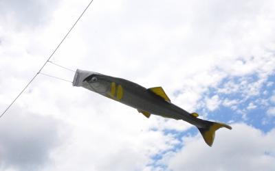 気仙川の鮎漁解禁