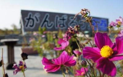 """東日本大震災・復興支援リポート 「被災地に勇気を発信し続ける""""がんばろう!石巻""""」"""