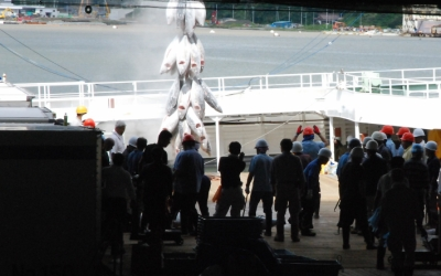 【海と生きる】気仙沼漁港マグロ水揚げ