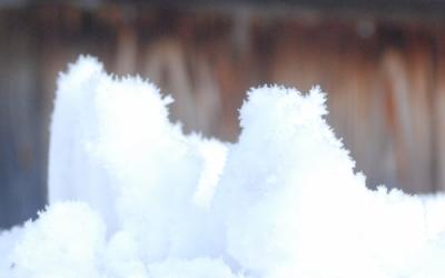 雪に毛が生えた!