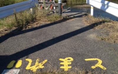 東日本大震災・復興支援リポート「震災の後、この子もさみしいのよ」