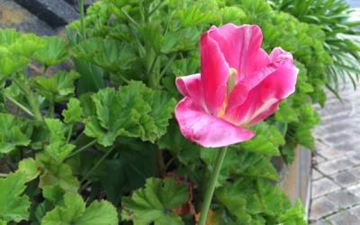 発見・今日の一枚「熱海の小さな花」
