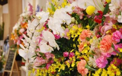 【さあ、これからだ】アバッセは花の香りにあふれて