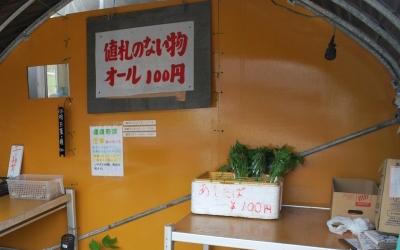 【変わった野菜】アシタバ