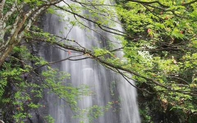 2014夏休みレポート Vol.6 ~水のまち・郡上八幡~