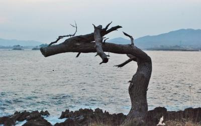 海辺の地をゆく「気仙沼・岩井崎」 2013年4月17日