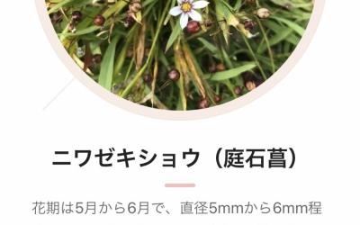 野草の証明
