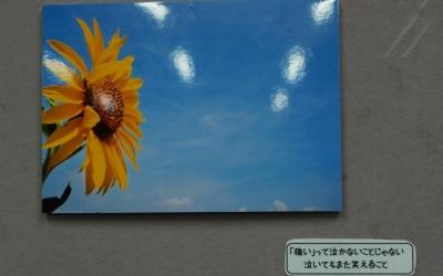東日本大震災・復興支援リポート「雪の石巻に咲いた真夏のひまわり」