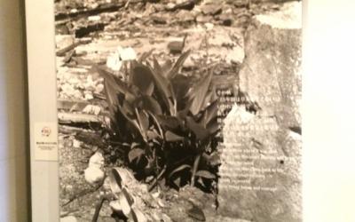 ヒロシマからの道「2016年5月27日、焦土に咲いたもうひとつの花」