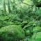 屋久島(やくしま)白谷雲水峡を自転車で登ってみた【旅レポ】