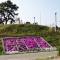 閖上(ゆりあげ)日和山の芝桜