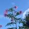 発見・今日の一枚「花のこころと秋の空」
