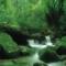 非オススメ!白谷雲水峡への無謀な挑戦(屋久島)【旅レポ】