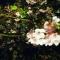 【国内旅行記1】結果的に(?)大満足だった河津桜巡り♪