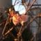 花で年を越した河津桜。咲く花のこころ