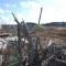 【遺構と記憶】国道45号線沿いに残された高田松原の被災松