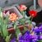 仮設住宅の花壇の向こう側