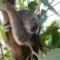 【海外旅行記1】シドニーで年越しを♪