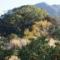 河津を訪れたならば必見!河津来宮神社の「オオクスノキ」