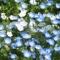 春到来、近所に咲く花々♪