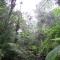 100年後には熱帯雨林がなくなっているかもしれない