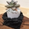雄勝石を使った鉢植え作りへの挑戦 - その1