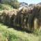 体験から学ぶ Part7 ~秋の稲刈り体験~