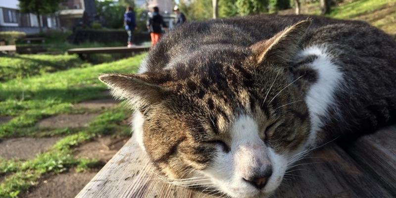 発見・今日の一枚「猫クンだって眠くなる温水池」