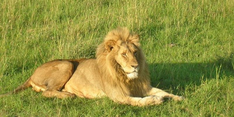 【世界一周の旅・アフリカ編 Vol.24】野生の王国・ケニアでサファリツアー!