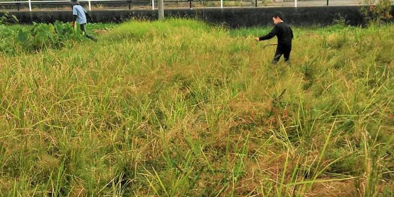 体験から学ぶ Part4 ~古代の稲刈りを再現しよう!~