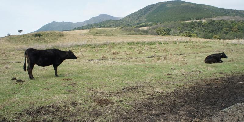 島の産業と景色を担う、口永良部島の町営牧場【旅レポ】